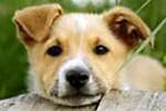 В 46-ти российских городах сегодня прошли акции в защиту животных