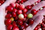 В регионах России в розничной продаже обнаружены радиоактивные ягоды