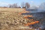 За сутки в Амурской области произошло 4 пала