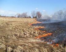 За сутки в Приамурье выгорело восемь гектаров