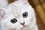 Кошки, испытывая стресс, начинают урчать
