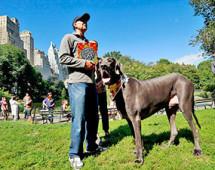 В штате Аризона, на восьмом году жизни, умерла самая большая в мире собака