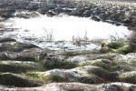 Многим водным объектам Амурской области грозит экологическая катастрофа