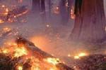 По прогнозу чрезвычайных ситуаций МЧС Приамурью грозят пожары и ящур