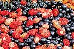 Йогурт, красное вино и ягоды обеспечат человеку долголетие