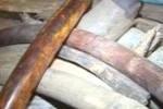 Преступник, похитивший бивни мамонта в Благовещенске, осужден на 2.5 года колонии