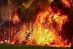 На Дальнем Востоке уничтожено более 35 гектаров леса