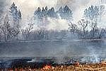 В региональном штабе по тушению лесных пожаров подвели предварительные итоги весеннего пожароопасного сезона 2014 года