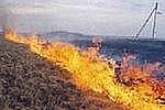 Якутский мыслитель выступил в защиту уничтожения полей и лесов сезонными палами