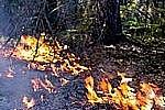 70% площадей лесных пожаров России приходится на Амурскую область