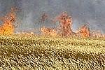 В Благовещенском районе Амурской области выгорело более 15 тысяч гектар
